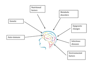 Factors affecting brain development and increasing risk of Autism