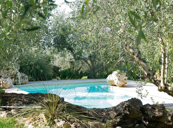 pool & greenery
