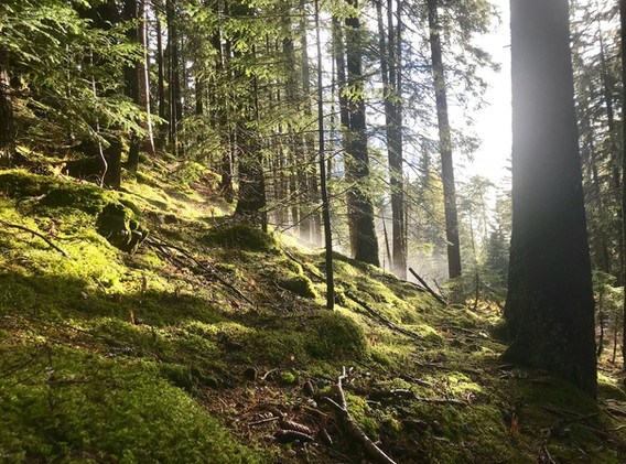 woods_chemin.jpg