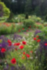 92671-Poppies-Salvia-Garden.jpg