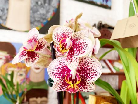 Las orquídeas llegaron para quedarse!