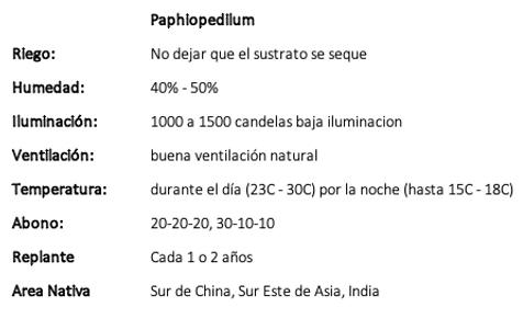 Paphiopedilum.png