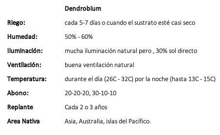 Dendrobium.png