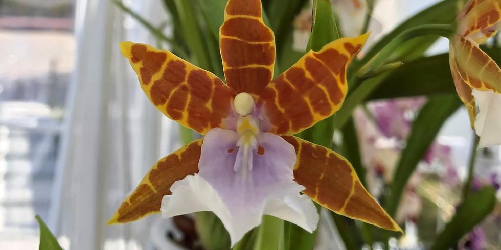 WorkShop - Como Cuidar tu orquídea desde el principio al final