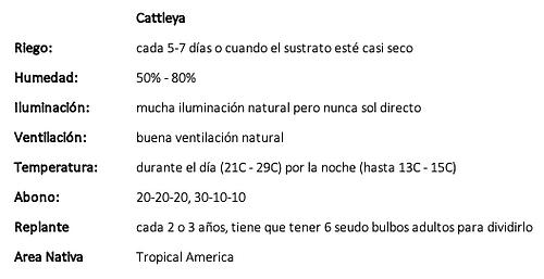 Cattleya.png