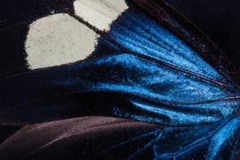 butterfly-199020_1920.jpg