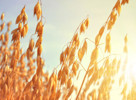Medicinal Properties of the Oat Plant