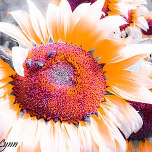 bee_love_sunflower_garden.jpg