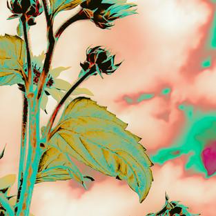 teal_magenta_sunflower_1.jpg