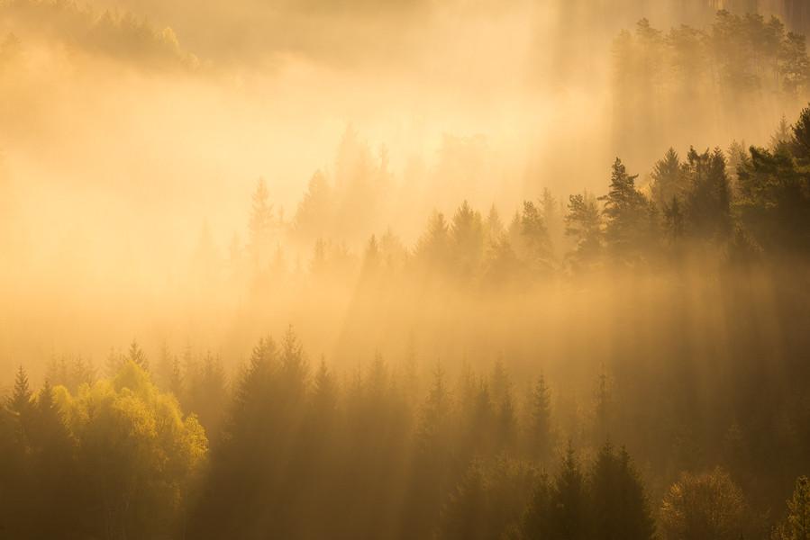 Saxon Switzerland Fog Sunrise