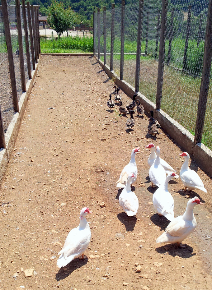 Azienda agricola papere - Agriturismo