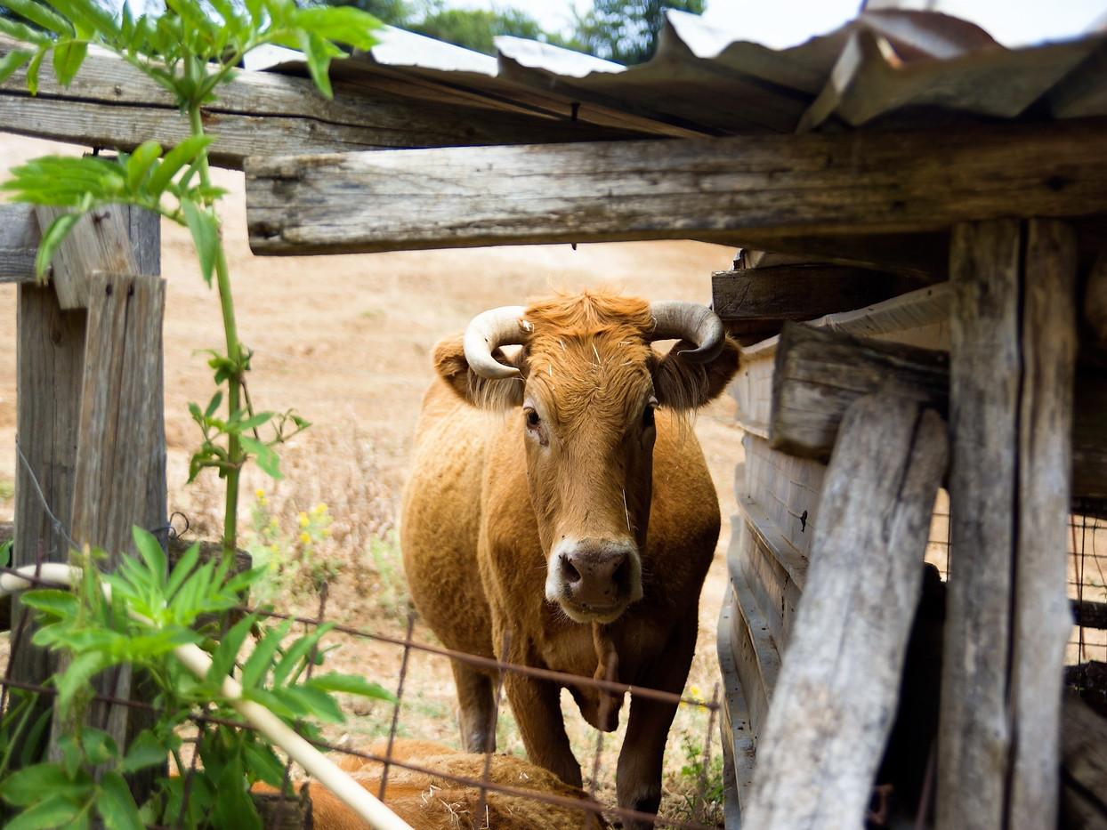 Azienda agricola bovini - Agriturismo