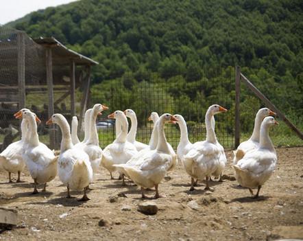 Azienda agricola oche - Agriturismo