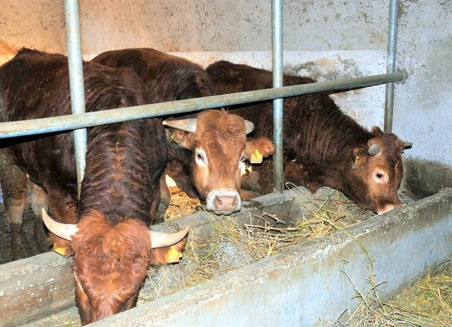 Azienda agricola bovini- Agriturismo