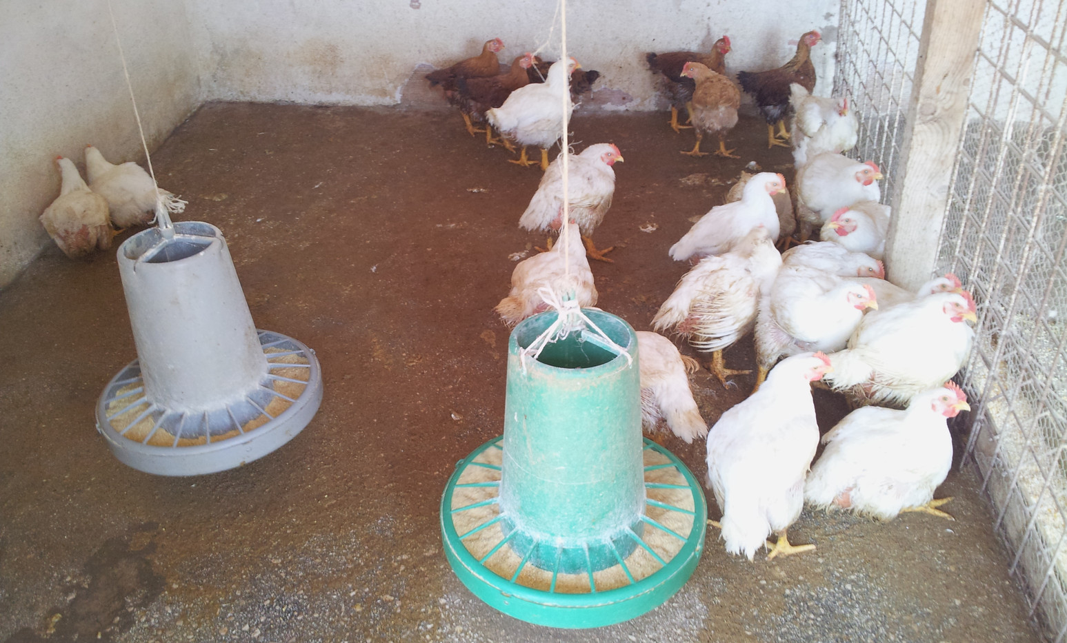 Azienda agricola polli - Agriturismo