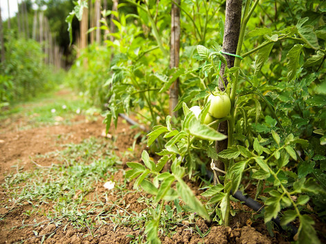 Ristorante orto - Agriturismo