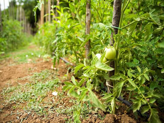 Azienda agricola orto - Agriturismo