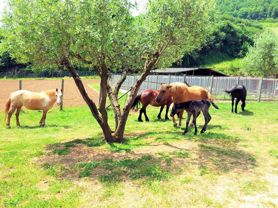 Azienda agricola cavalli - Agriturismo