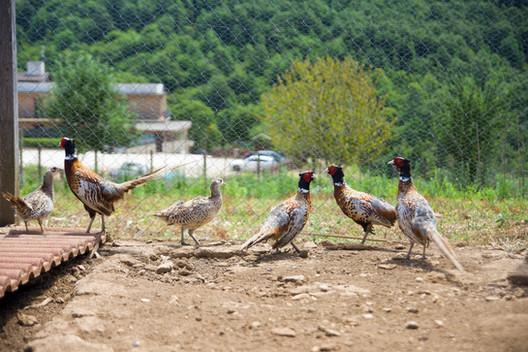Azienda agricola faggiani - Agriturismo
