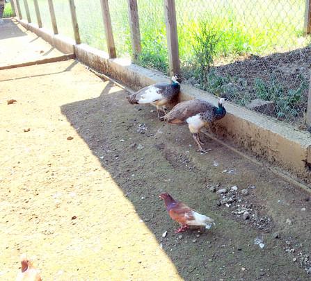 Azienda agricola pavone - Agriturismo