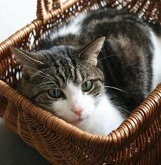 Les Amis de Néo adoption chat chaton