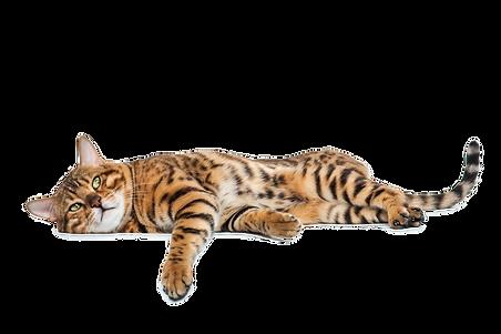 RL ndos cat.png