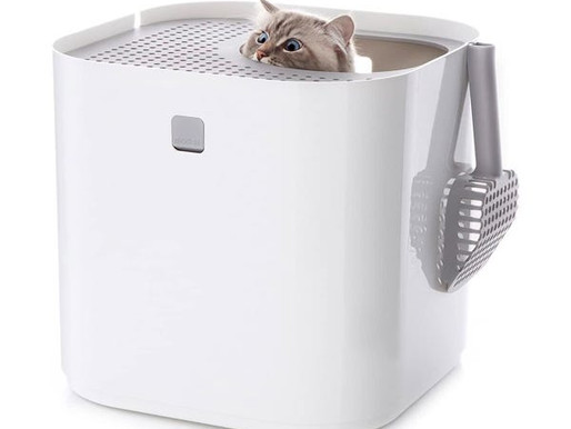 Memahami Pilihan Kucing: Covered atau Uncovered Litter Box?