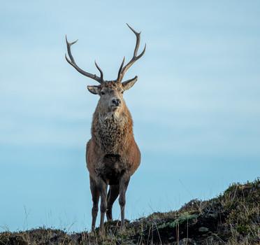 Monarch of Skye