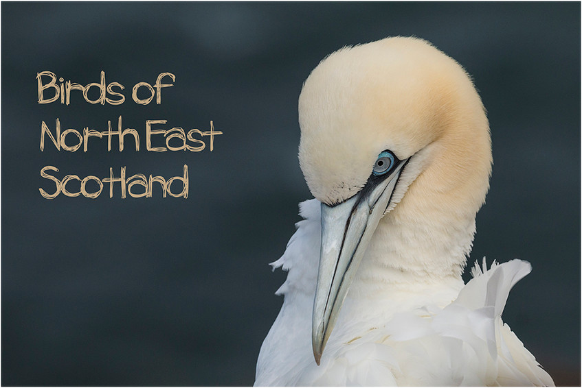 Birds of North East Scotland
