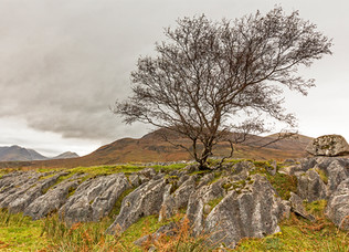 Winners for 'A Lone Tree' Competition