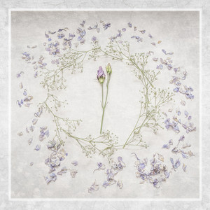 Lisianthus - Hayley-Jane Stanley