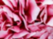 Flakes of lush pink peony flower.jpg