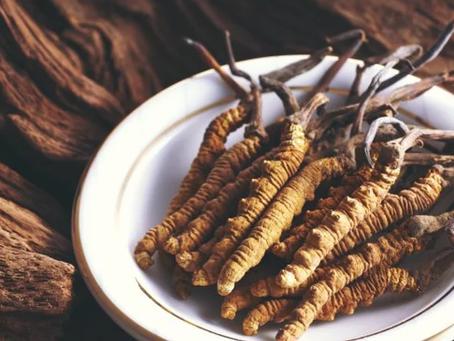 Medicinal Mushroom Series: Cordyceps (Cordyceps sinensis)