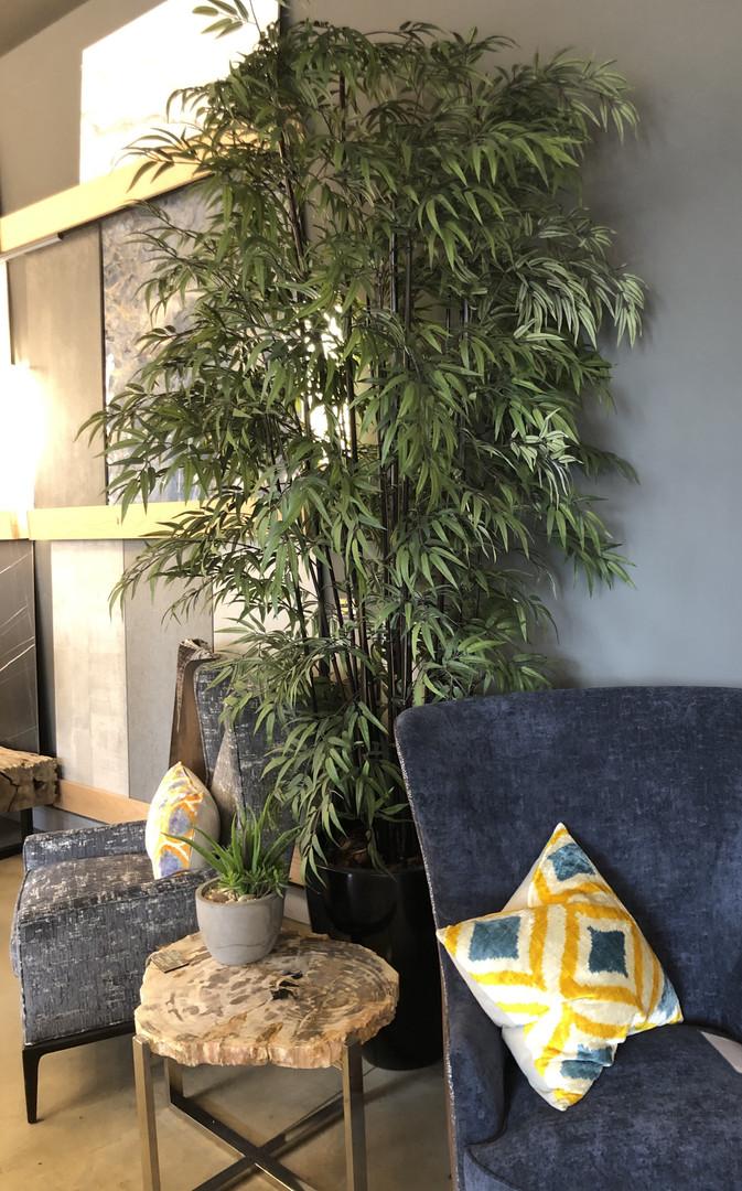 12' Black bamboo in Black gloss planter