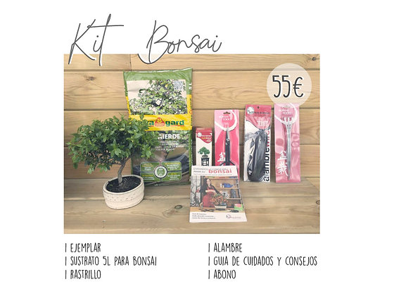 Kit Bonsai Starter