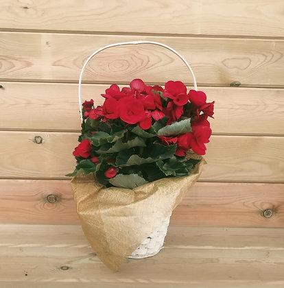 Cesta + Planta con flor
