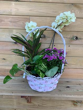 Cesta Mix + Orquídea