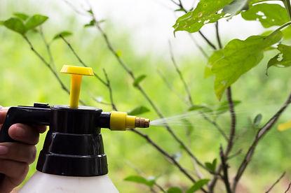 gente-rociando-insecticidas-arboles_4093