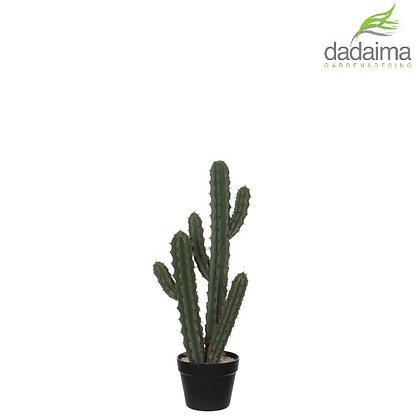 Cactus ARTIFICIAL