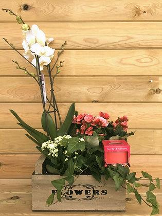 Centro Caja Vintage Orquídea + Vela Perfumada