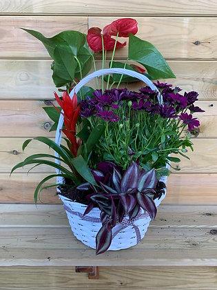 Cesta Mix Plantas con flor