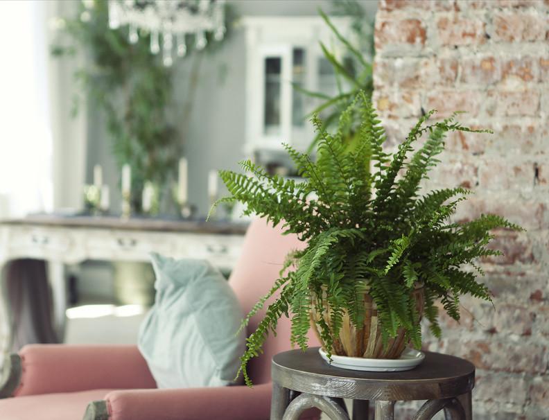 grønn plante i vintage-stue