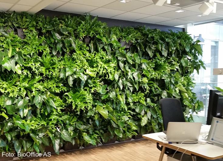 kontorrom med plantevegg