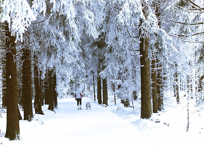 snødekte trær i skogen