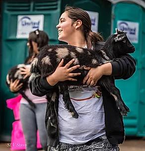 petting zoo.webp