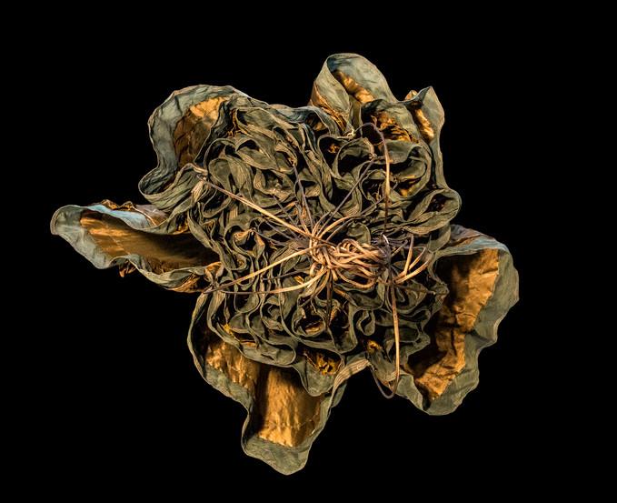 Jellyfish Occulta TAP 696-26-F2