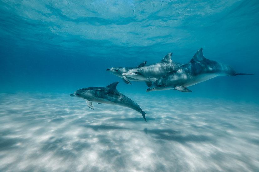 Esperance Dolphins II