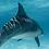 Thumbnail: Esperance Dolphins I