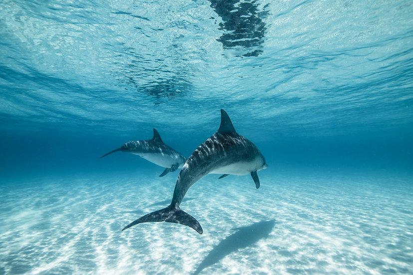 Esperance Dolphins I