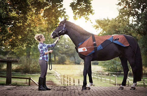 yoga for horse and rider